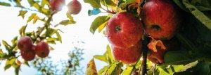 low hanging fruit 1200 x 430