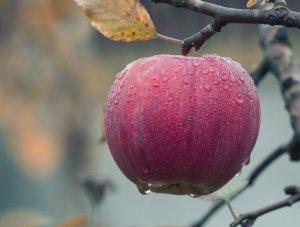 lowhangingfruit 470 x 355