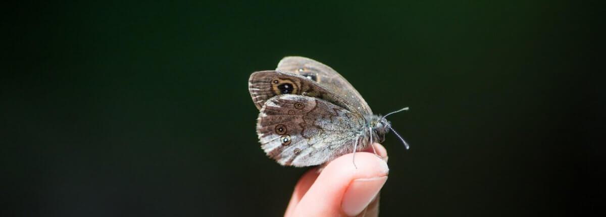 Moth Myth
