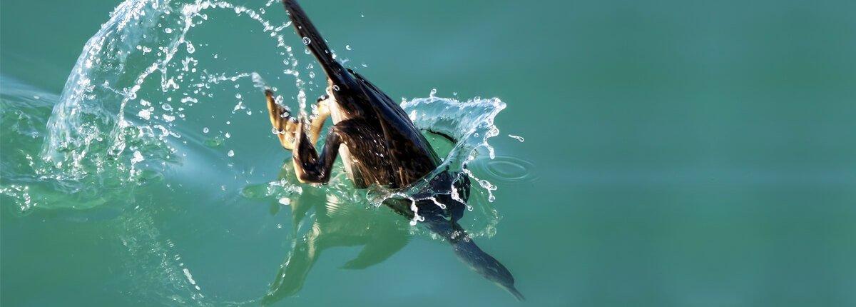Shedding Light on Bycatch