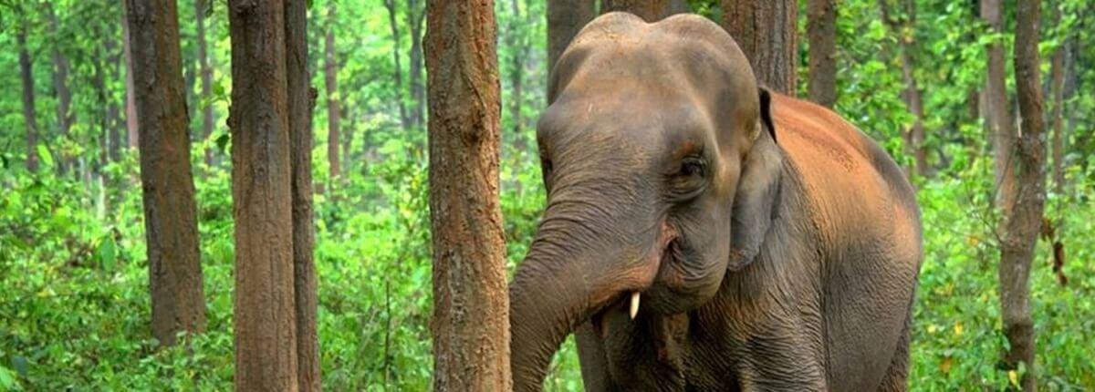 LEDs vs Elephants
