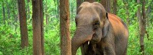elephant 1200 x 430