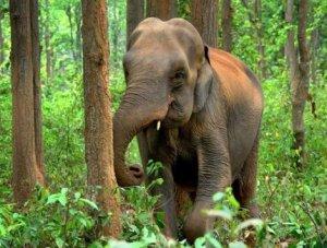 elephant 470 x 355