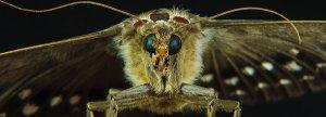 moth 1200 x 430